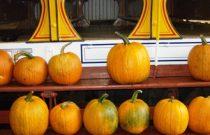 flavorista_pumpkins