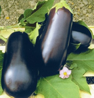 johnnys_seeds_eggplant