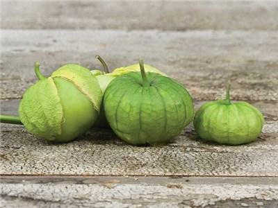Tomatillo-Rio-Grande-Verde-web
